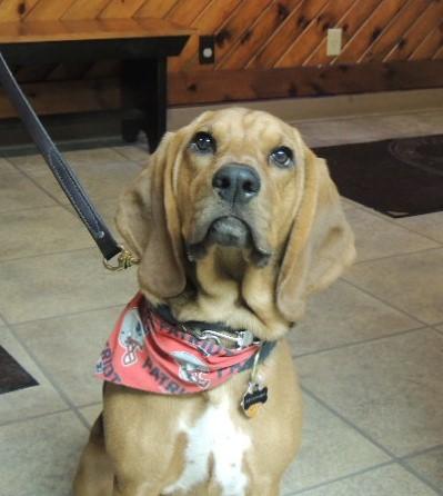 Edgefield Veterinary Hospital, LLC, Hampstead NH-Home Page